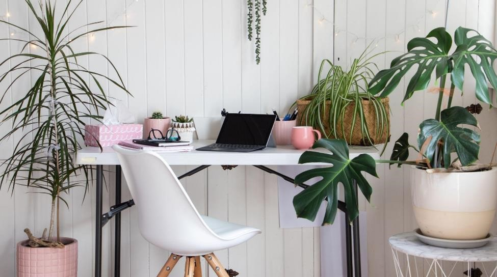 Desk and chair among plants